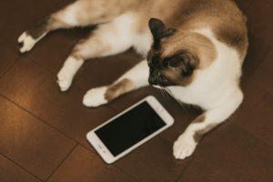 UX_cat